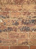 Worn brick. Color photo of old brick building with worn and peeling paint on red bricks royalty free stock images