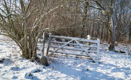 Worn gate in snowy field Royalty Free Stock Images