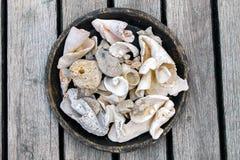 Worn out seashells Stock Photo