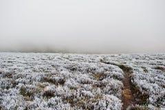 Worn path on frozen mountain grass with fog on the horizon. Royalty Free Stock Photo