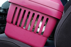Worrying Cat. A cat in a travel basket looking out and meowing Stock Photos