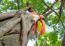 Worship with colored ribbons at the holy banyan tree Royalty Free Stock Images