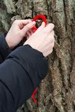 Worship of the oak, woman hanging a red string on the trunk of an oak tree and it is made for making a wish Royalty Free Stock Photography