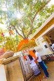 Worshippers дерева Anuradhapura Jaya Sri Maha Bodhi Стоковые Фотографии RF