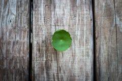 Wort asiático verde da moeda de um centavo (ella do centavo asiático) no backgrou de madeira Fotografia de Stock Royalty Free