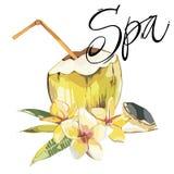 Wort-Badekurort Vector gezeichnete Skizze der Kokosnuss Hand mit Plumeriablumen Tropische Lebensmittelillustration des Aquarellve Lizenzfreie Stockbilder