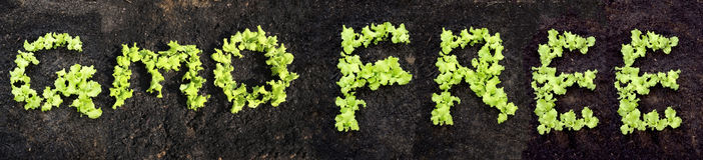 Wort GMO GEBEN frei Stockbilder