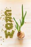 Wort Grow gemacht von Mungobohnen Wachsende Zwiebel mit schönem Grün stockfotos