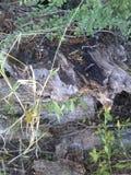 wortel Stock Afbeelding