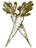 Wortel royalty-vrije illustratie