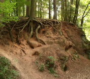 Wortel en bomen stock afbeelding