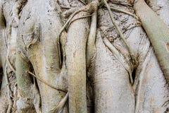 Wortel houten textuur Royalty-vrije Stock Foto's
