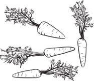 Wortel Lijntekening van een wortel Stock Afbeeldingen
