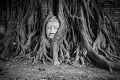 Wortel van Banyan-Boom Enwrap het Hoofd van Boedha - Ayutthaya, Thailand Stock Foto's