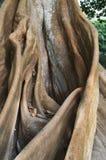 Wortel van een boom, aardachtergrond Stock Fotografie