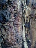 wortel van lantaarn Royalty-vrije Stock Afbeelding