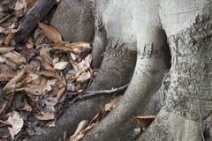 Worteldetail van boom in bos stock fotografie