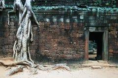 Wortels en deuropening, Ta Phrom, Kambodja Stock Foto