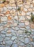 Wortels op de muurachtergrond Stock Foto