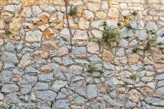 Wortels op de muurachtergrond Royalty-vrije Stock Foto