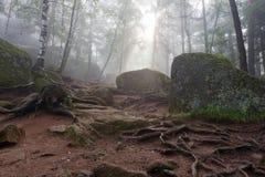Wortels, rotsen en bomen Royalty-vrije Stock Foto's