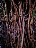 Wortels van de boom royalty-vrije stock foto's