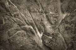 Wortels van een gevallen boom Stock Foto's