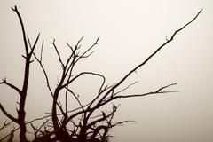 Wortels van weerlegde boom en mo Stock Foto's