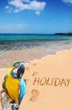 Wortfeiertag und -papagei auf dem Strand Lizenzfreie Stockfotos