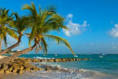 Worthing beach in Barbados. Beach with palm trees on ocean. stock images