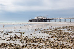 Worthing beach and pier in a cloudy day, low tide, England. Royalty Free Stock Photography