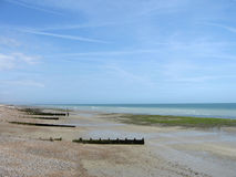 Worthing. Seascape in Worthing with sea and plants on beach Stock Photography
