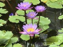 Worts λουλουδιών Στοκ φωτογραφίες με δικαίωμα ελεύθερης χρήσης