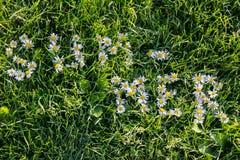 Wortsommer auf Gras durch camomiles Lizenzfreies Stockfoto