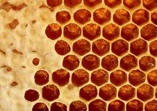 wosk honeycomb Fotografia Royalty Free