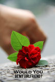 Would you be my girl friend. The Beautiful Roses Royalty Free Stock Photography