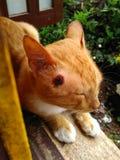 Wounded кот стоковые фотографии rf