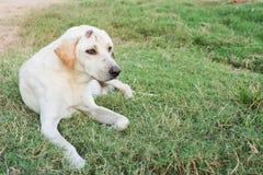 Wounded dog sitting Royalty Free Stock Photo