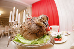 A wounded pheasant hunting. cooked chef to the Banquet. Traditional still life feast.  Stock Photos