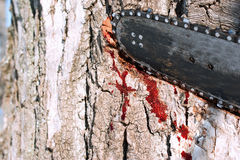 Wounded planet. Environmental concept, a bleeding tree and chainsaw Royalty Free Stock Photo