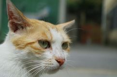 A wounded stray cat. Lonely and free.Even if hurt, do not forget kindness Royalty Free Stock Photo