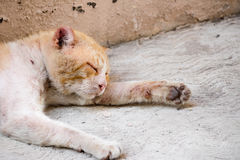 Wounded street cat. Photograph of a wounded and sad street cat Royalty Free Stock Photos