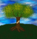 Wounded tree Royalty Free Stock Photo