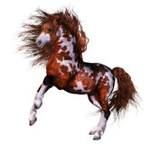 A wounderful horse. A powerful native horse isolated Royalty Free Stock Images