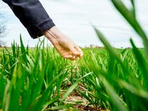 Woung农业检查收获的妇女生物学家 免版税库存图片