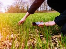 Woung农业检查收获的妇女生物学家 免版税库存照片
