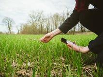 Woung rolnictwa kobiety biolożka sprawdza żniwo Obrazy Royalty Free