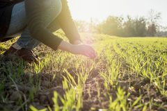 Woung rolnictwa kobiety biolożka sprawdza żniwo Zdjęcie Royalty Free