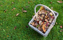 Woven basket of fall leaves on grass Stock Image