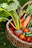 Woven basket with fresh produce from a vegetable garden Stock Image